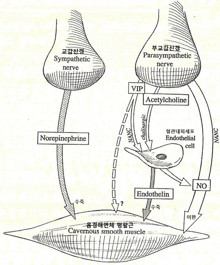 발기기전1.png